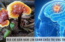 Địa chỉ bán nấm lim xanh chữa ung thư não uy tín toàn quốc